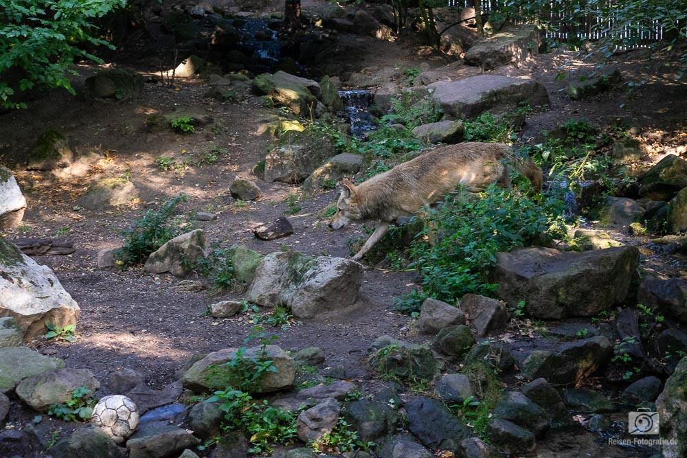 zoo-muenster-2018-5
