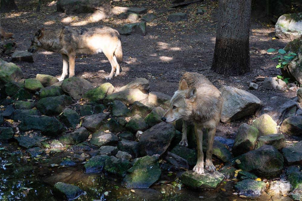 zoo-muenster-2018-6