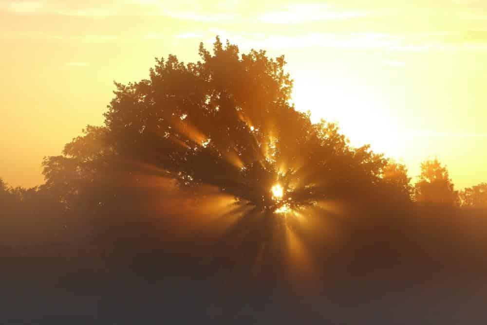 Sonne hinterm Baum