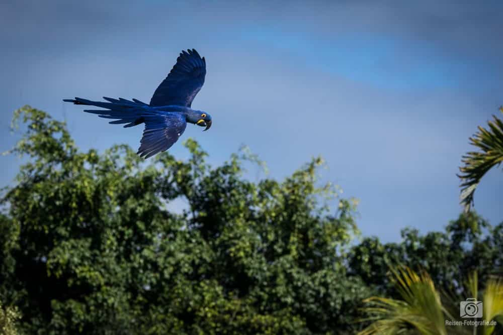 Loro Parque - Papageien