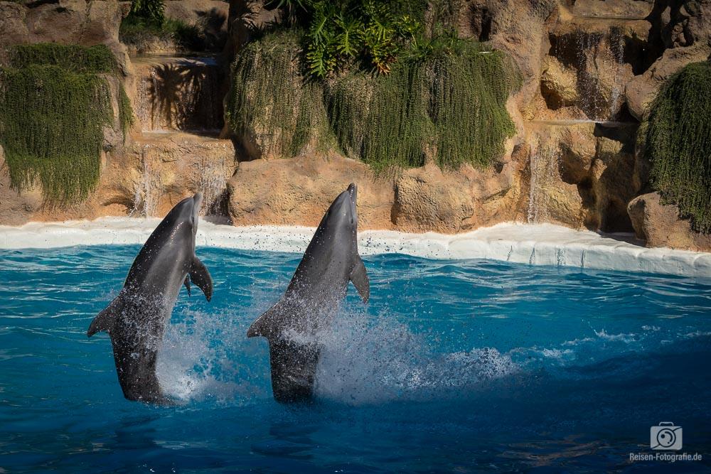 Loro Parque - Delfin Show
