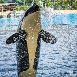 Orca im Loro Parque