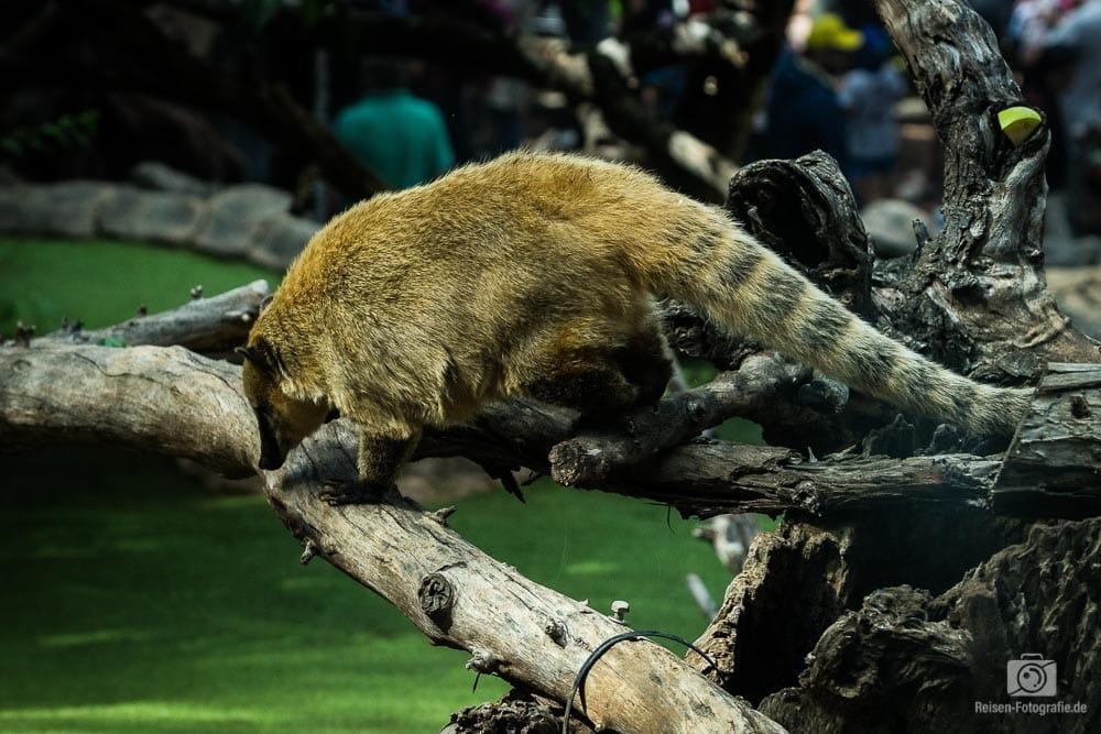 Loro Parque - Ameisenbär