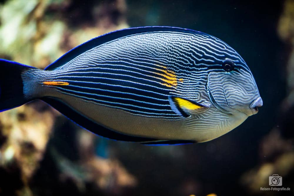 Fische im Aquazoo