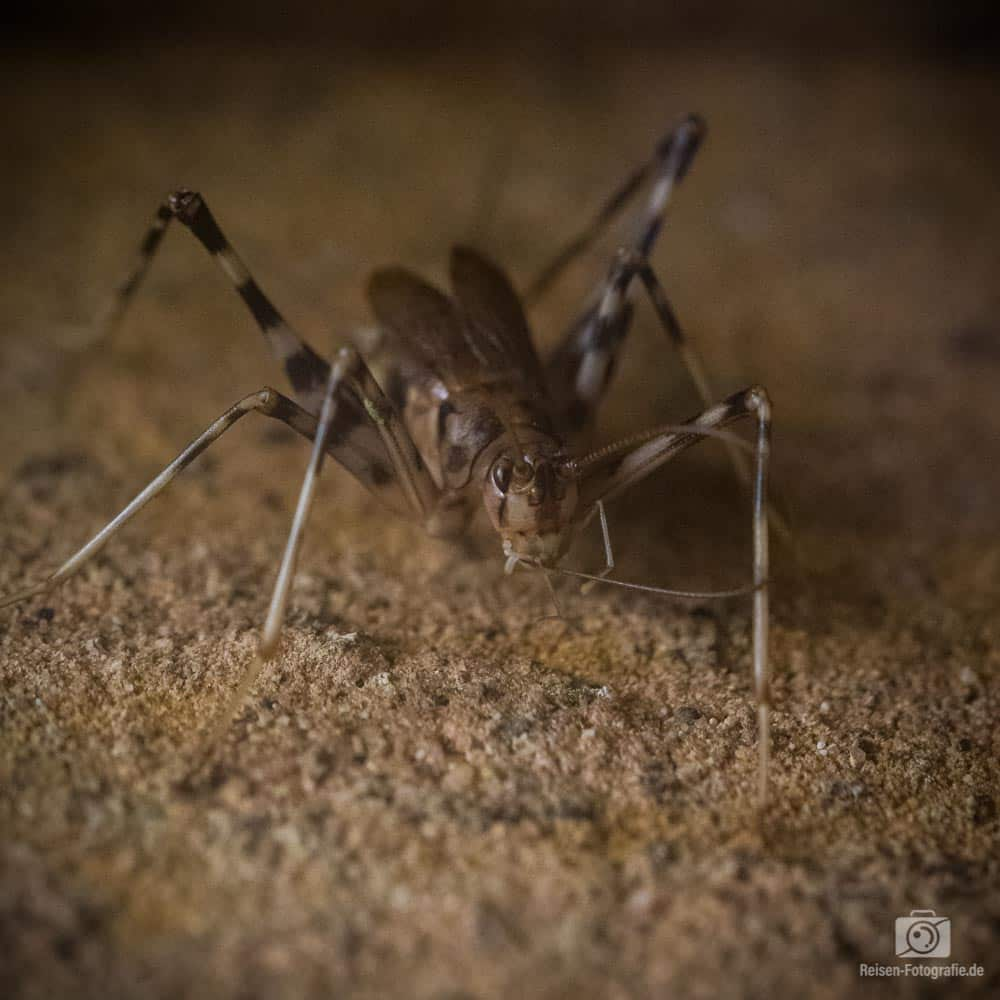 Insekten im Aquazoo