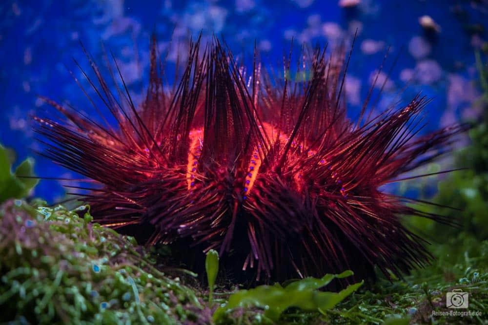 Pflanzen in den Aquarien des Aquazoos