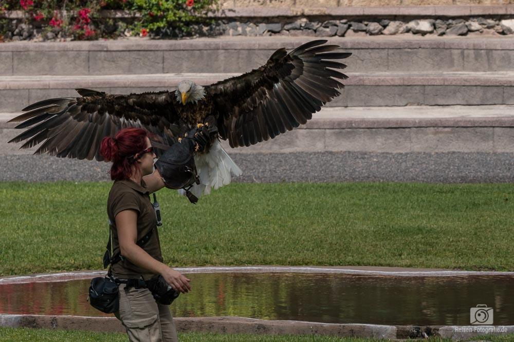 Greifvogelshow im Jungle Park