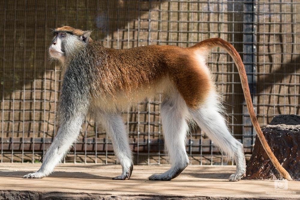 Monkey Park Teneriffa