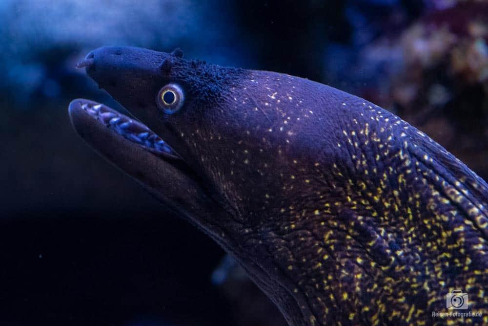 mallorca tag 2 aquarium 2 Aquarium Palma