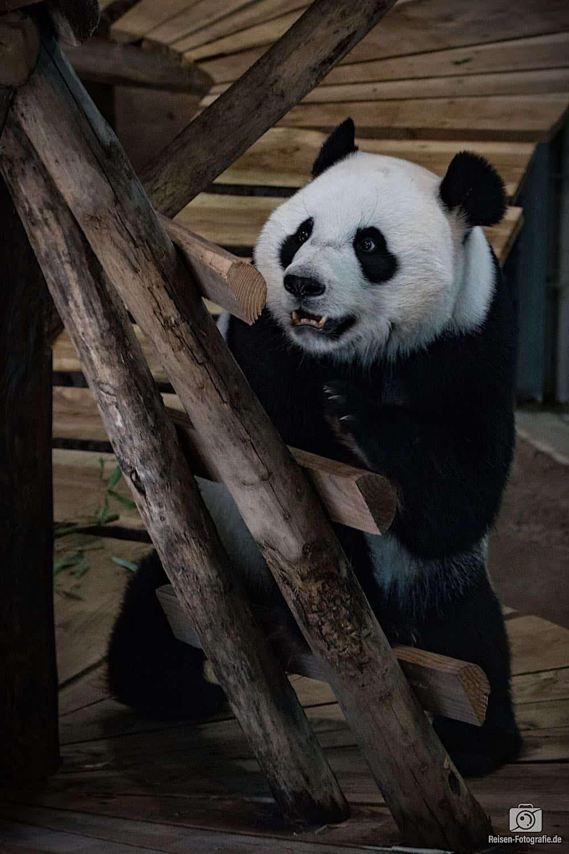 Ouwehands Zoo Rhenen 12