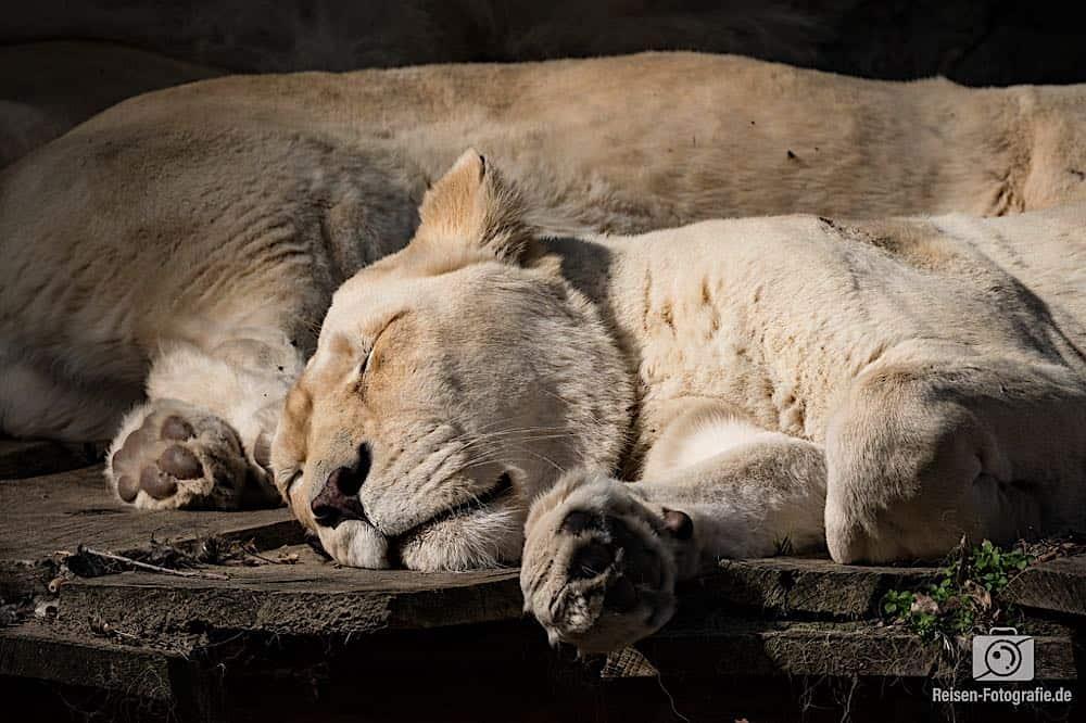 Ouwehands Zoo Rhenen 36