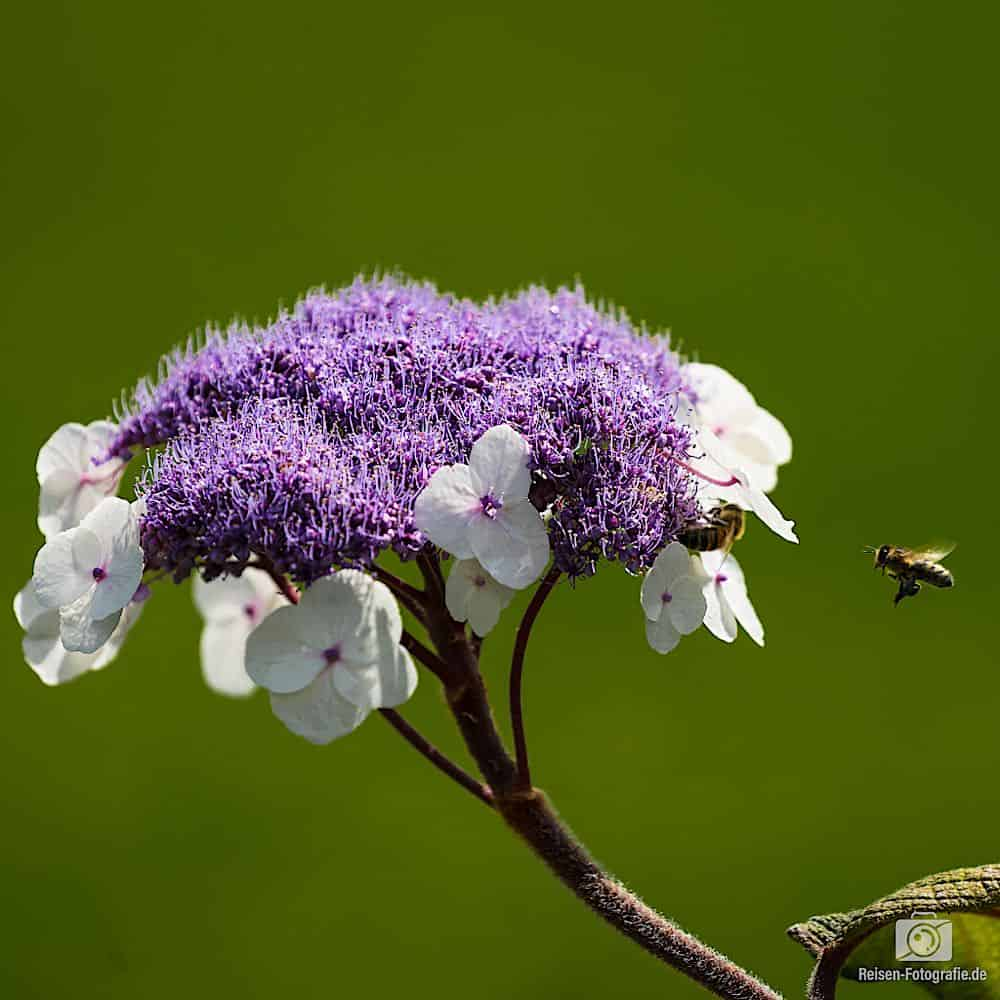 Armadale Blumen