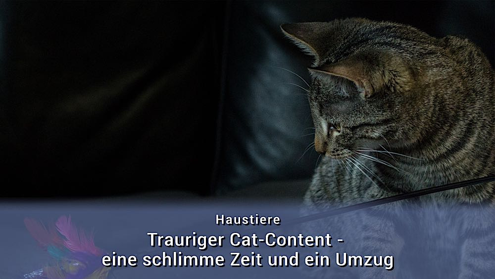 Trauriger Cat Content