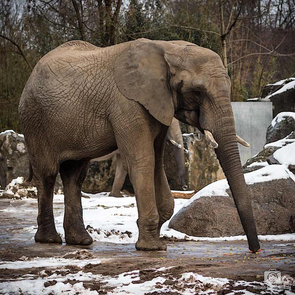 blog-2019-02-01-zoo-duisburg-10
