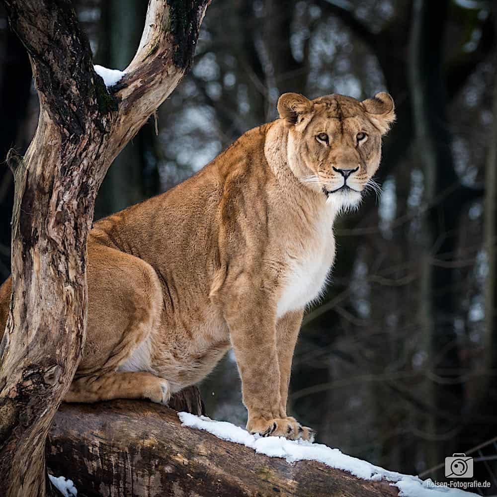 blog-2019-02-01-zoo-duisburg-15