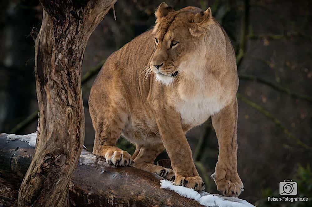 blog-2019-02-01-zoo-duisburg-16