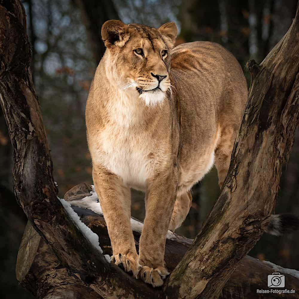 blog-2019-02-01-zoo-duisburg-17