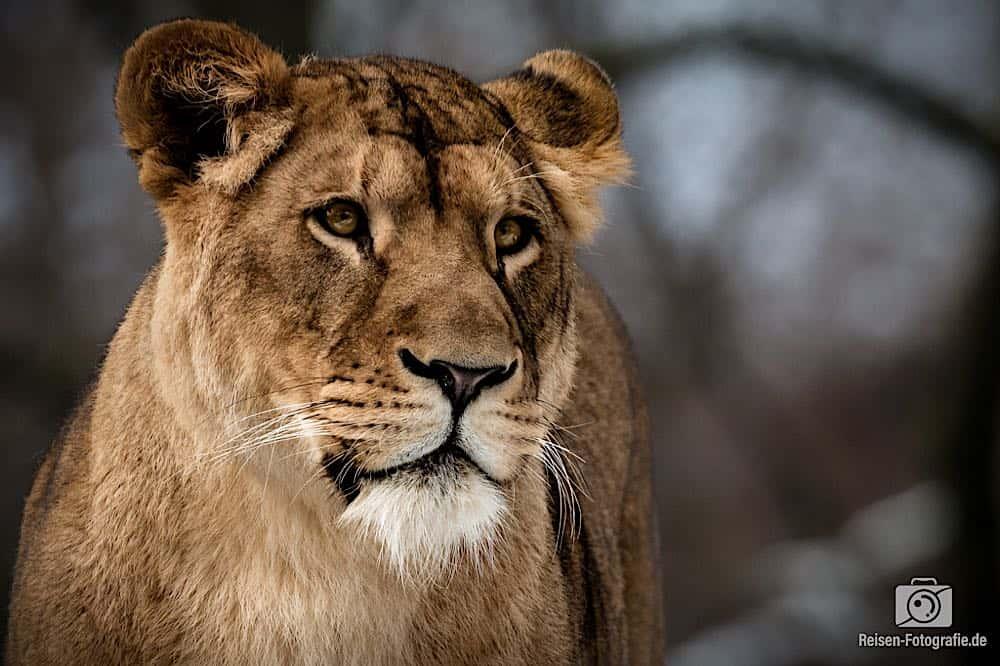 blog-2019-02-01-zoo-duisburg-18