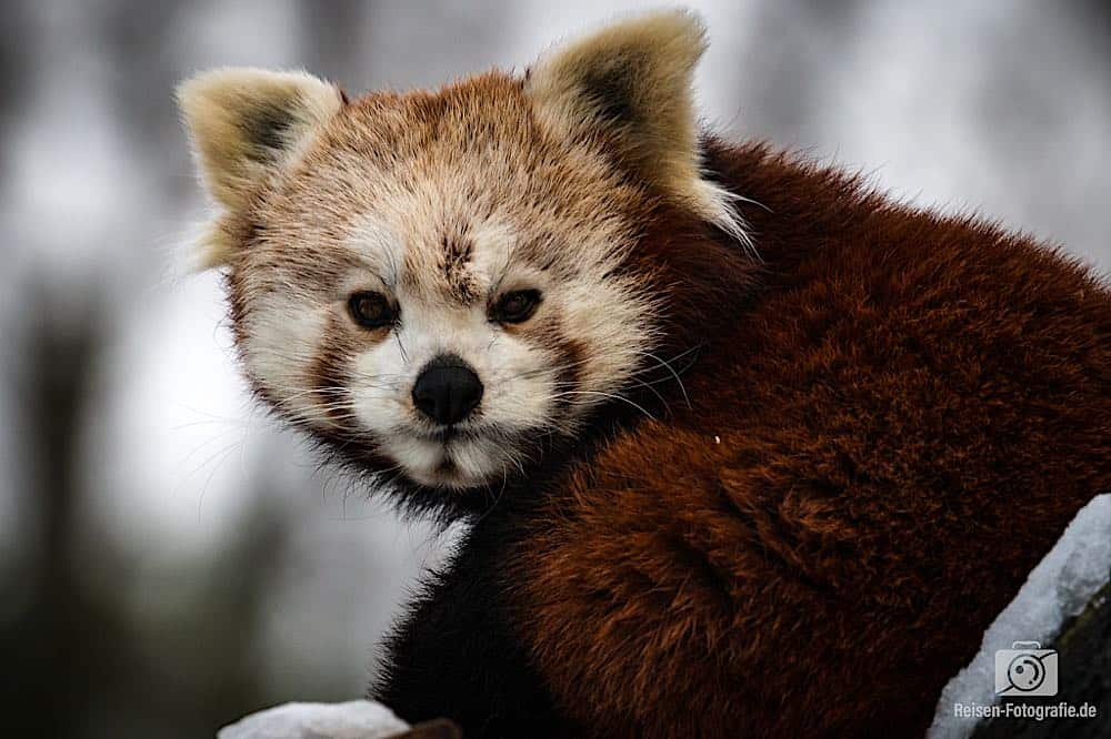 blog-2019-02-01-zoo-duisburg-19