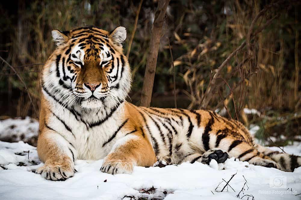 blog-2019-02-01-zoo-duisburg-21