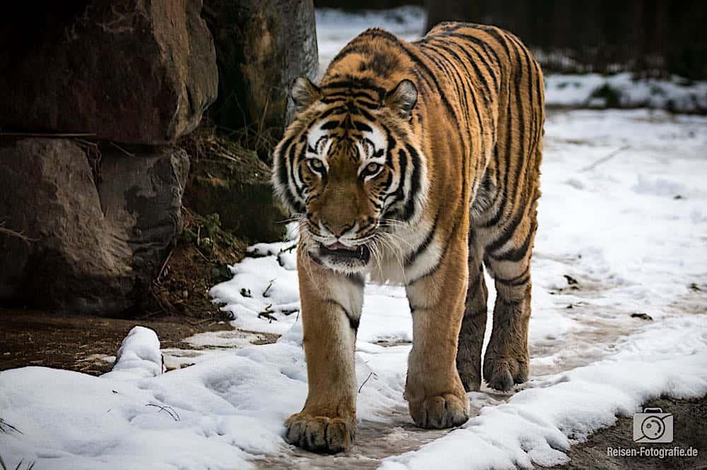 blog-2019-02-01-zoo-duisburg-23