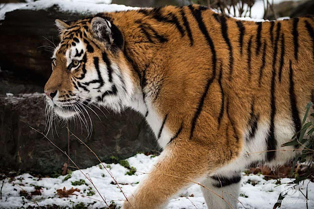 blog-2019-02-01-zoo-duisburg-24