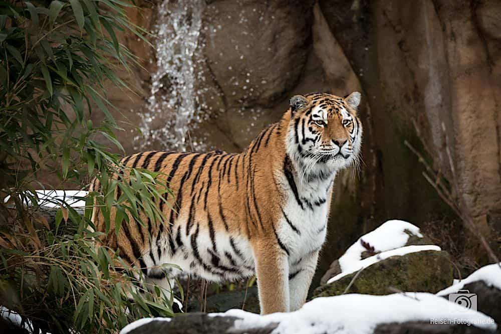 blog-2019-02-01-zoo-duisburg-25