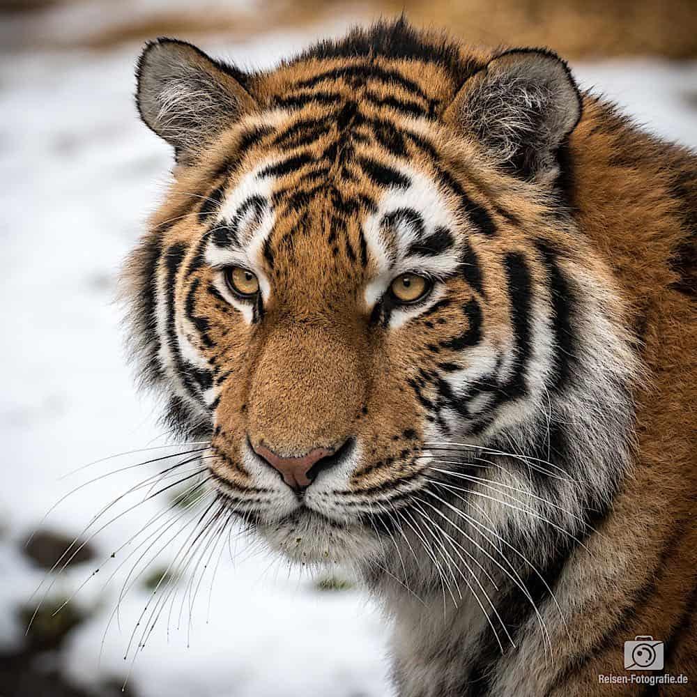 blog-2019-02-01-zoo-duisburg-26