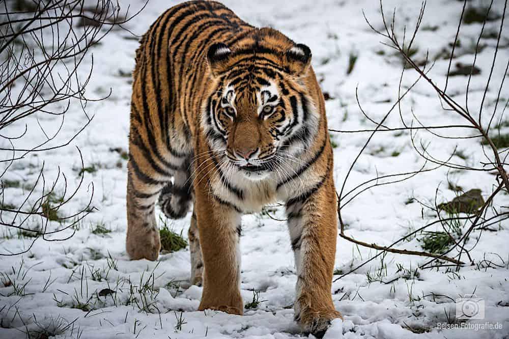 blog-2019-02-01-zoo-duisburg-28