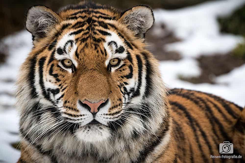 blog-2019-02-01-zoo-duisburg-29
