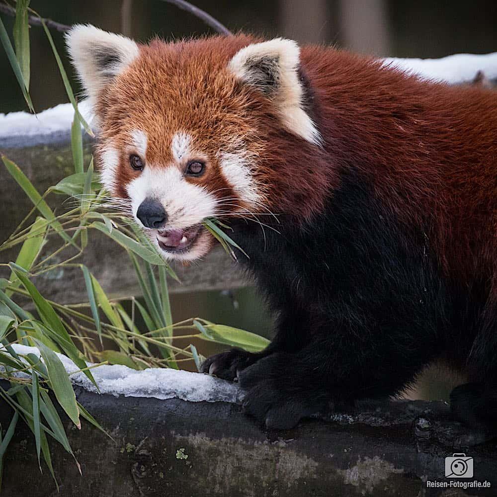 blog-2019-02-01-zoo-duisburg-30