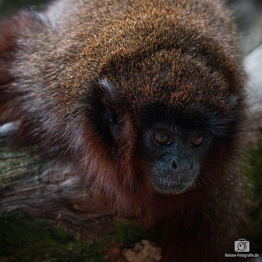 Zoo Apenheul 06-2019,