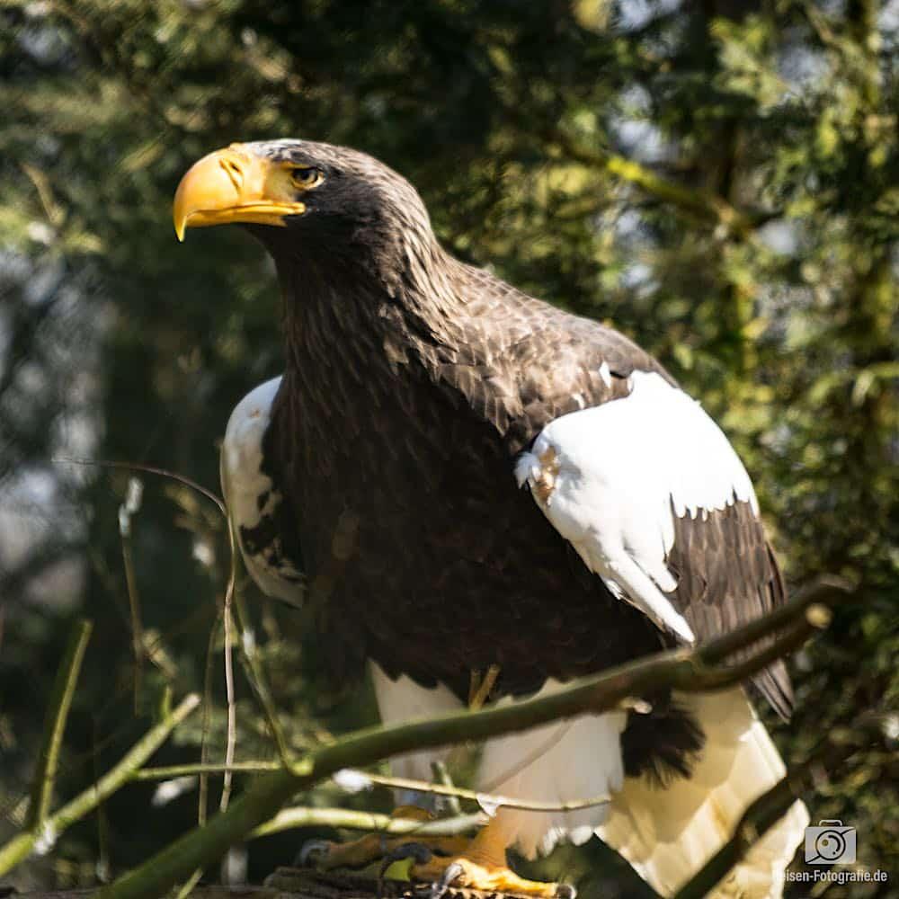 Weltvogelpark Walsrode,