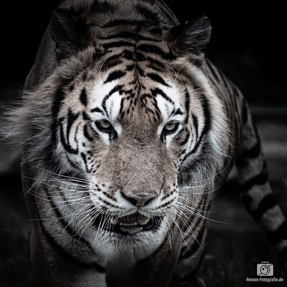 Zoo Amneville