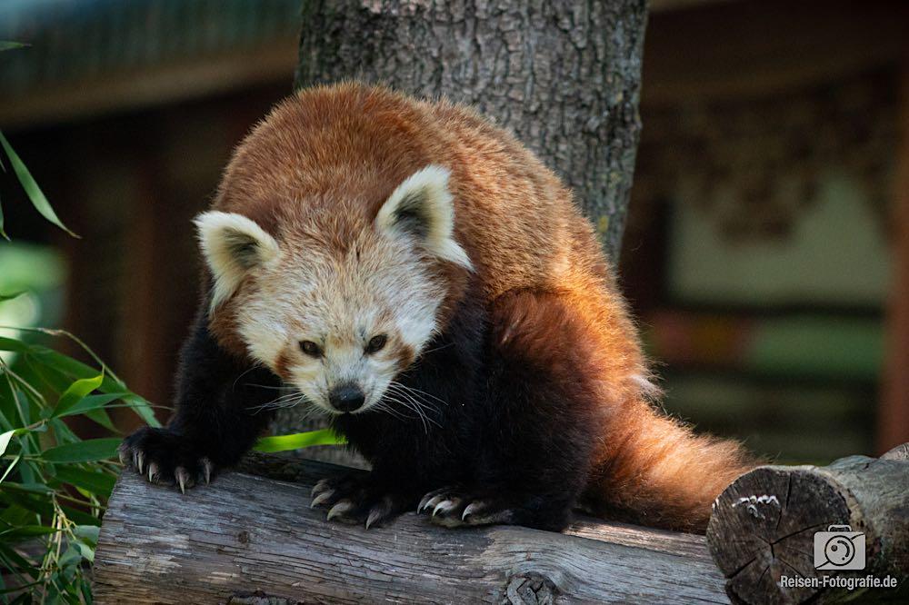 Zoo Pairi Daiza -2019,