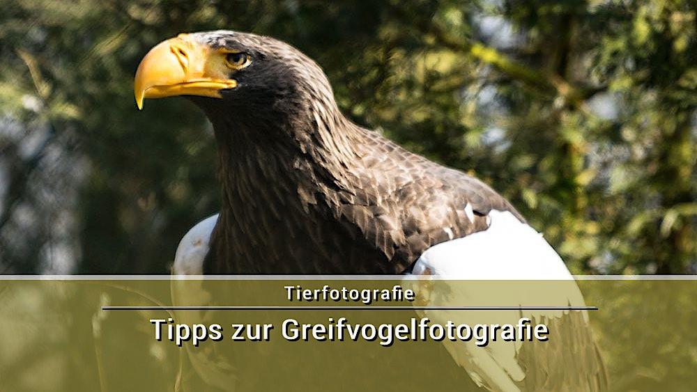 Fotoschule Greifvogelfotografie