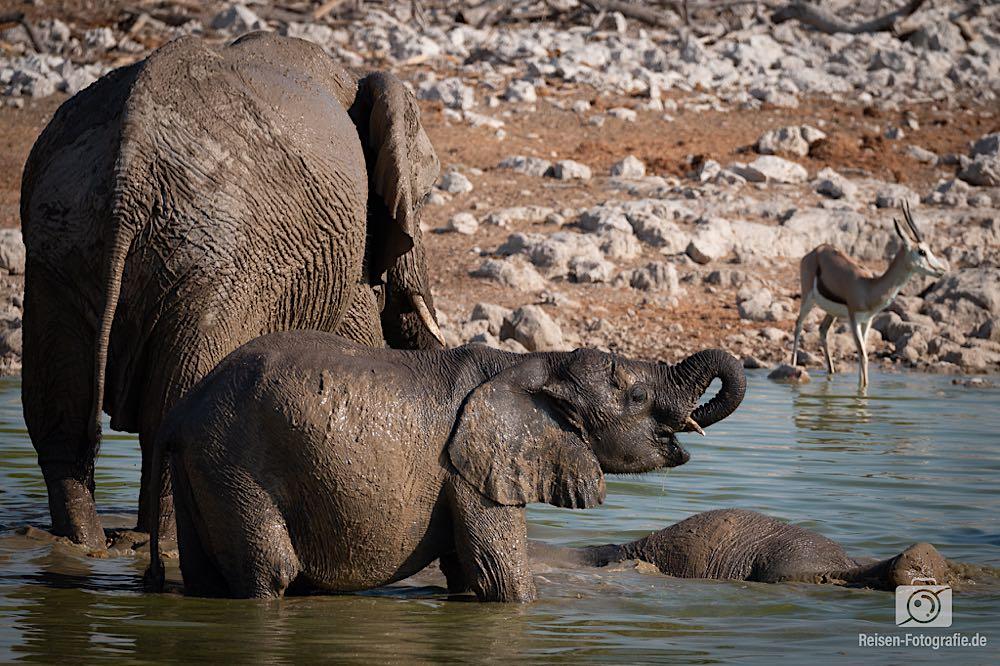 Minielefant beim trinken