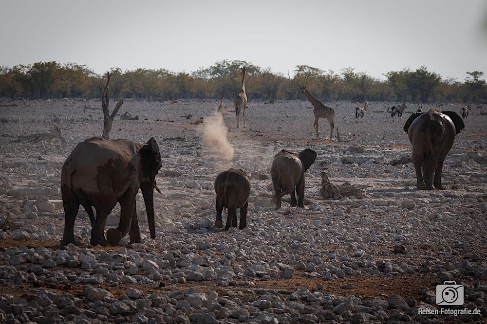Die Elefanten Karavane zieht weiter
