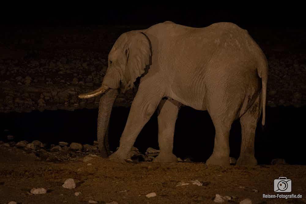 Einzelner Elefant am Wasserloch