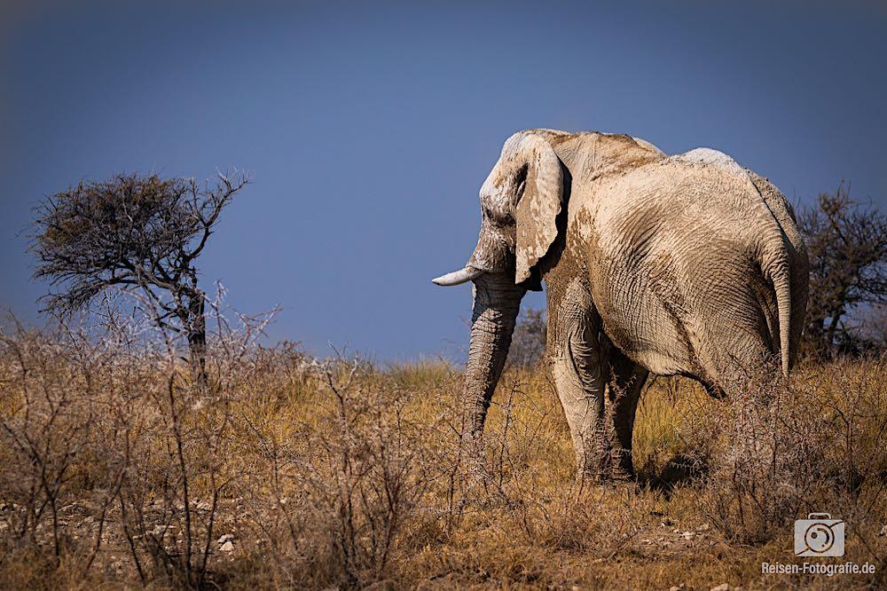 Unser WOW-Elefanten-Bild der Reise