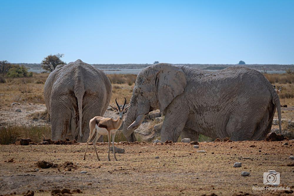 Zwei Elefanten im Wasserbad