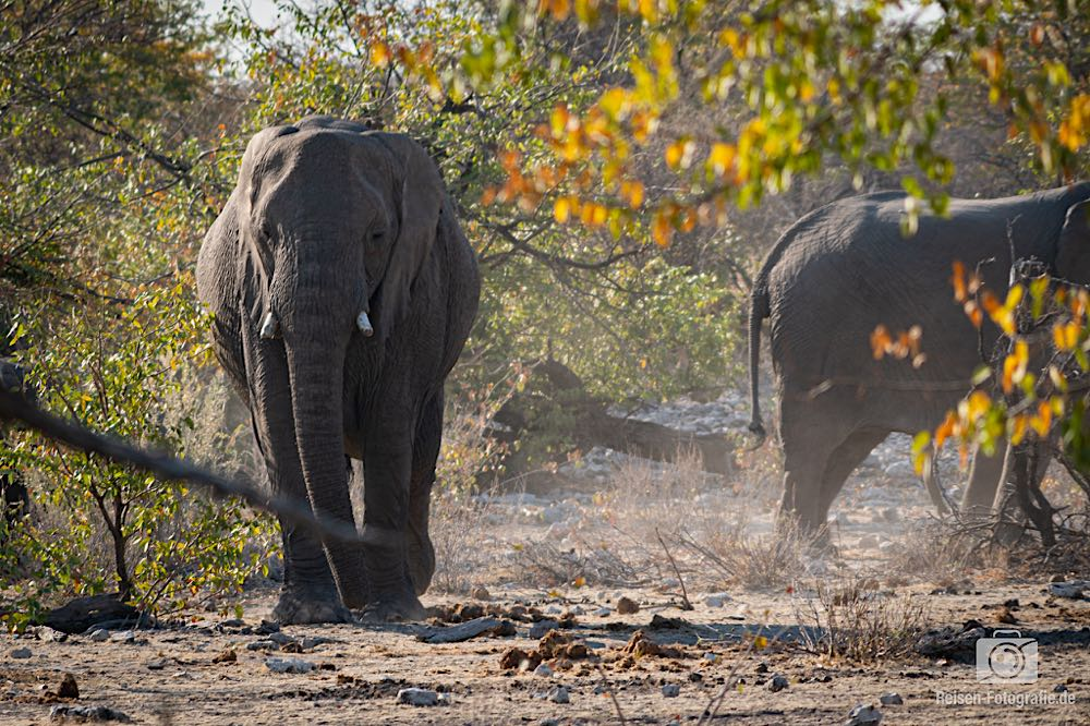Elefanten im Wald