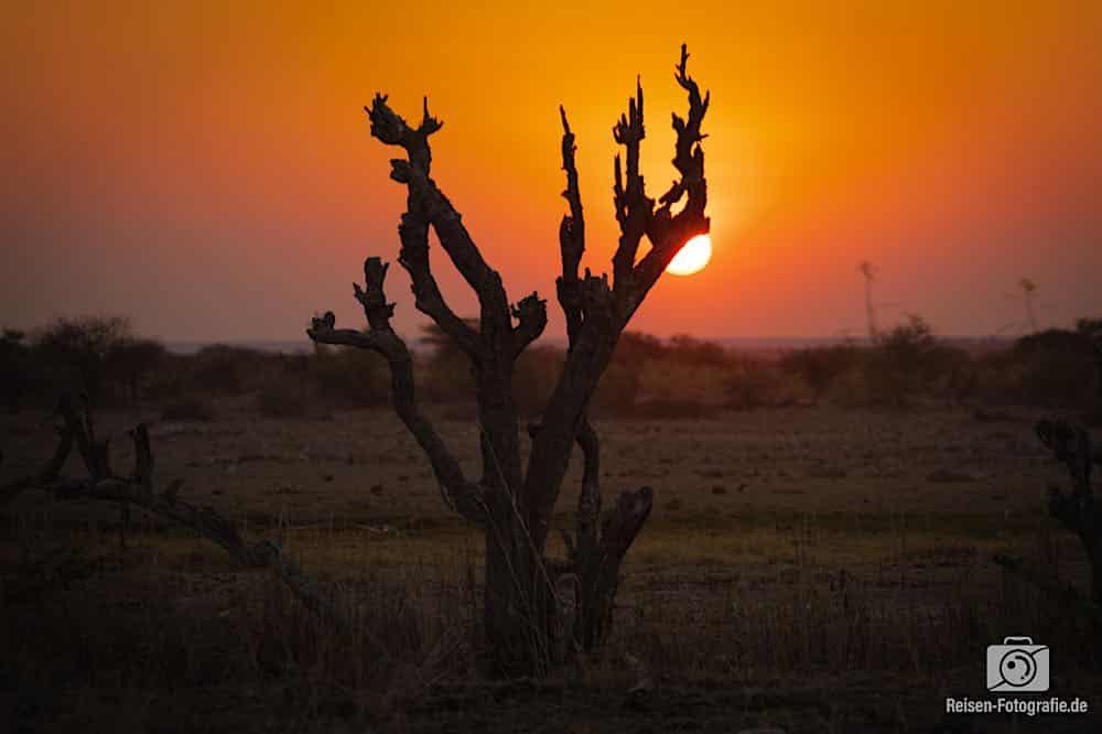 Sonnenuntergang am Namutoni Wasserloch