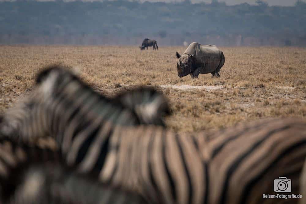 Nashorn, bevor es von den anderen Touris vertrieben wurde *grummel*