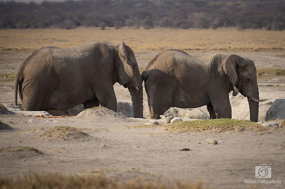 Am Wegesrand, zwei Elefanten im Loch - da schienen Reste von Wasser drinnen zu stehen.
