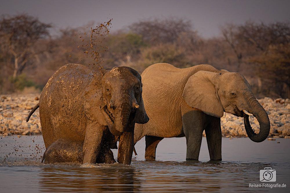 Elefanten im Wasserloch