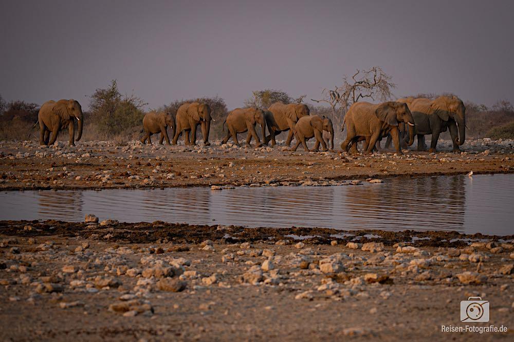 Elefanten Familie B