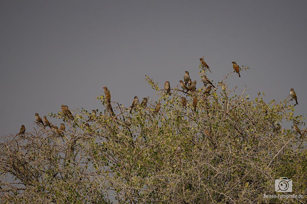 Ein Baum voller Vögel - da sind wir gerade überfragr, welche das waren