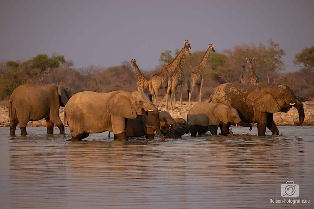 Wasserlöcher im Etosha
