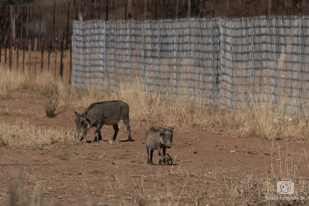 Namibia Tag 10